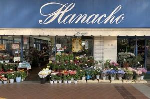 hanacho_01